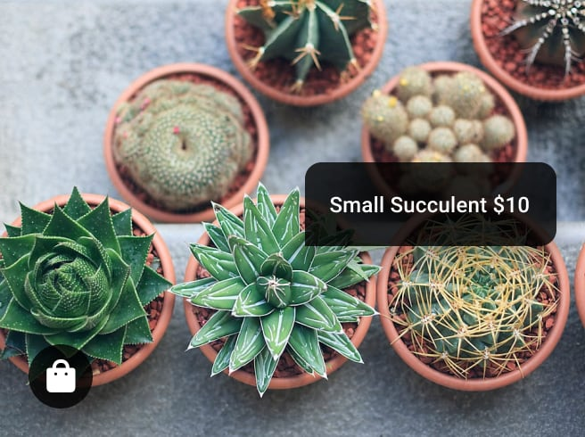 Instagram shopping interface highlighting small succulents for sale