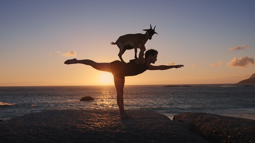 Photo of someone doing yoga with a goat on their back