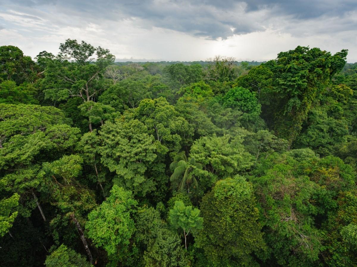 Curbing Amazon Land Listings on Marketplace